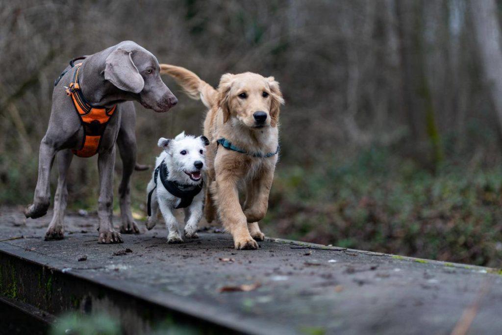 Séances en groupe en médiation animale