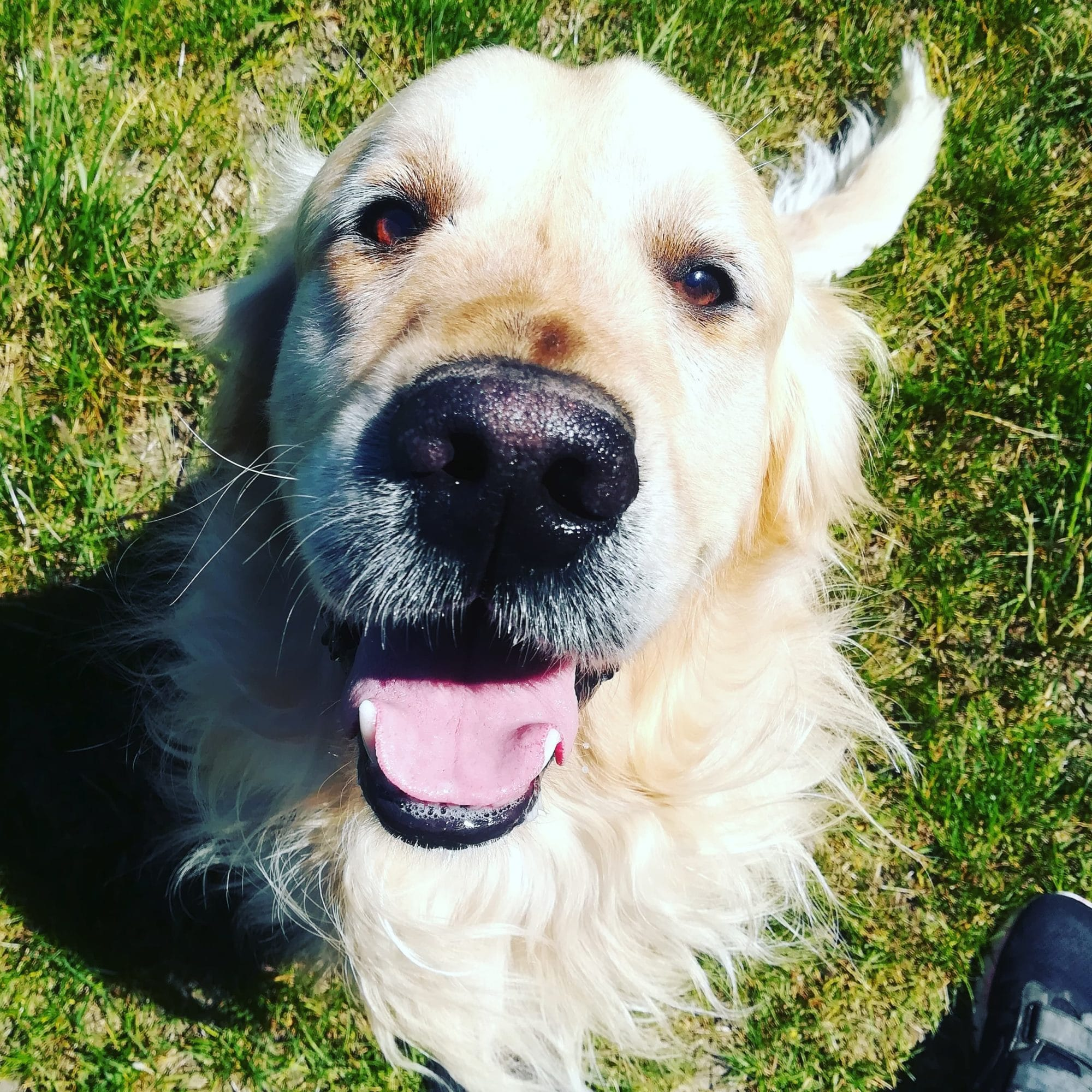 Heross, chien de médiation animale