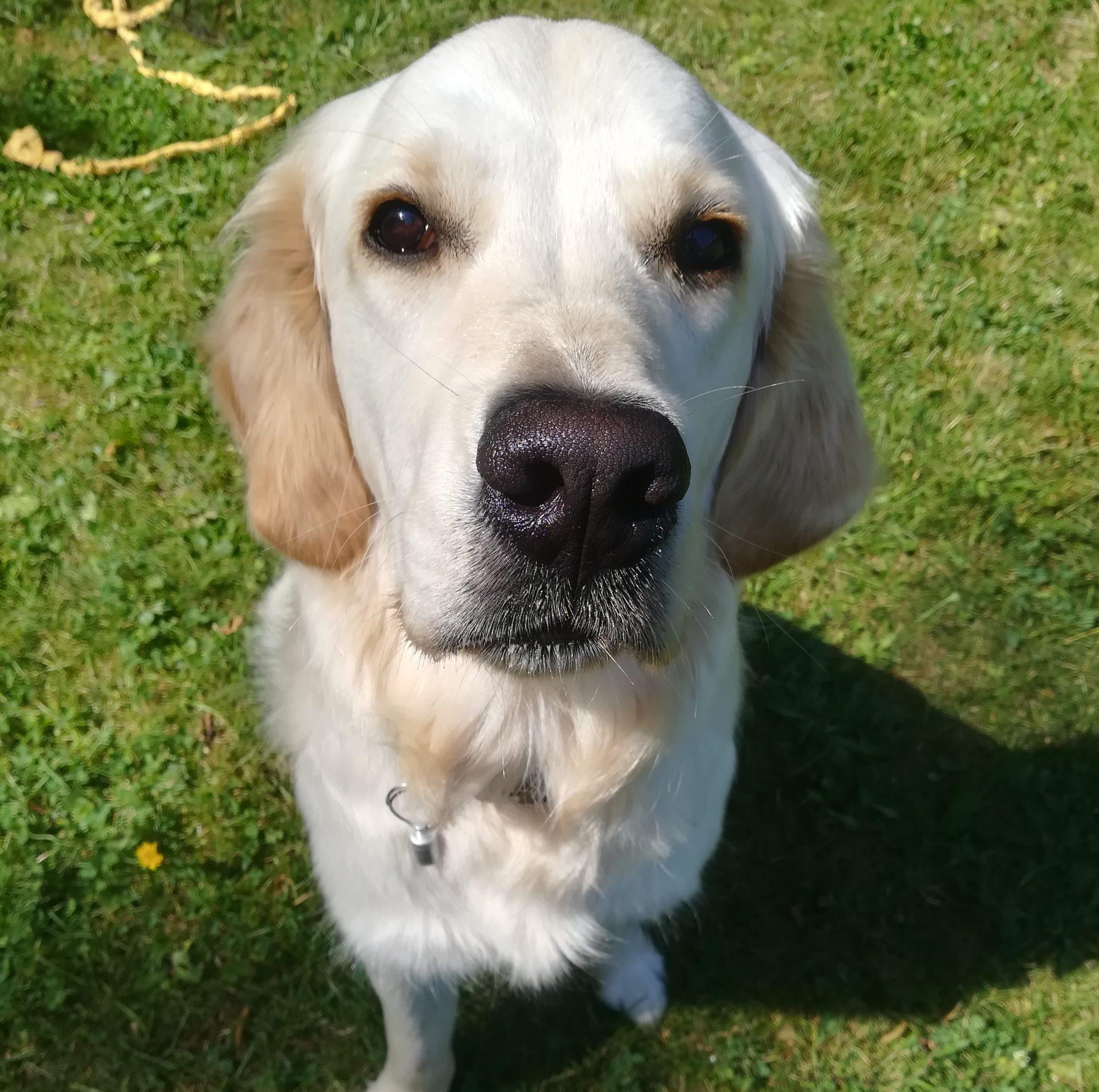 Noisette, chien de médiation animale