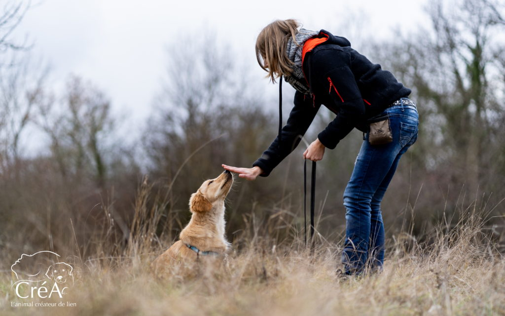 Médiation animale avec un golden retriever