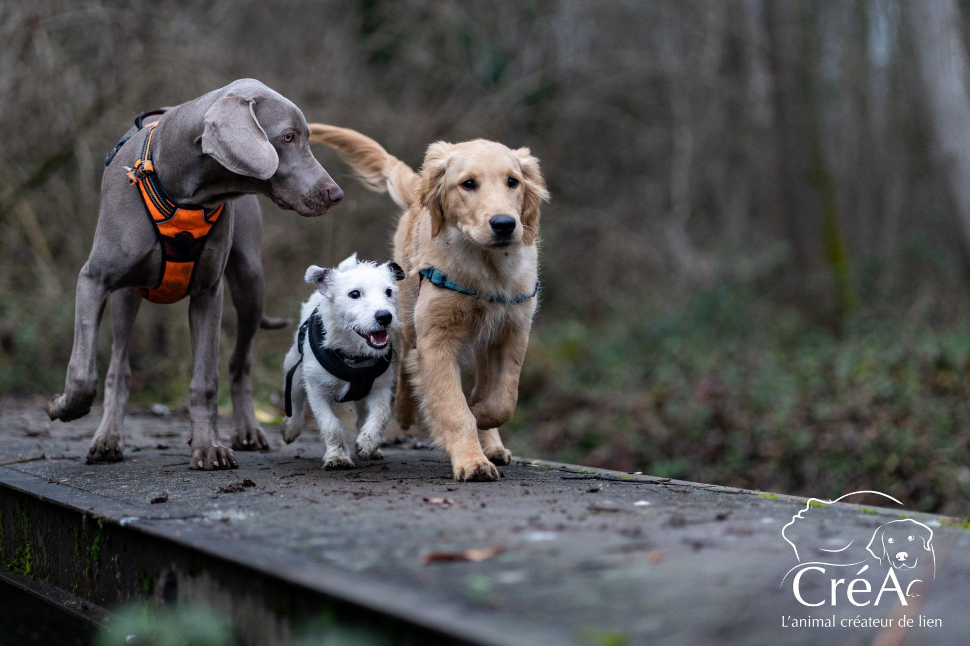 Séances collectives en médiation animale