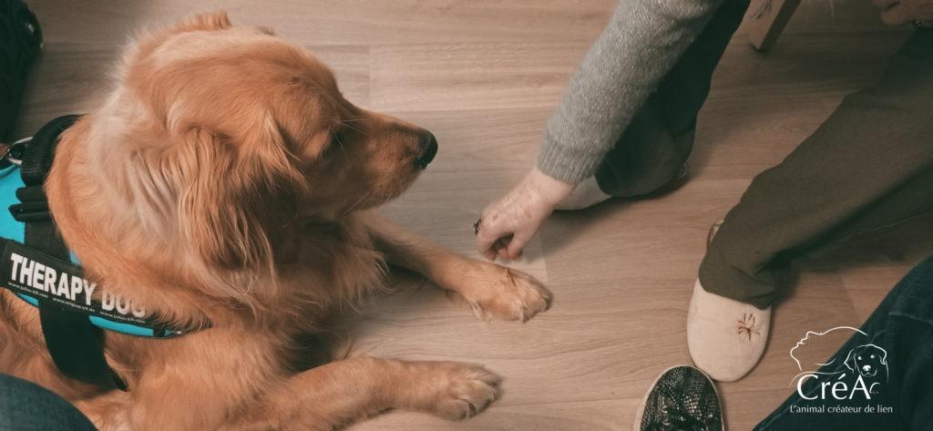 Médiation animale auprès des personnes âgées (EHPAD) avec des chiens